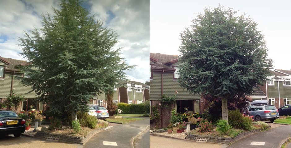access2trees-tree_trimming-before-and-after_940x479